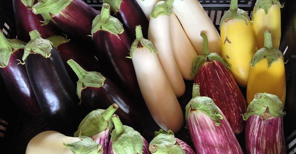 late-fall-eggplant
